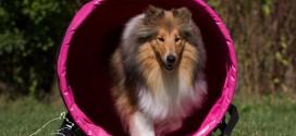 Hundefolk samler sammen til Kræftens Bekæmpelse