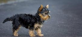 Barselsorlov til hundeejere