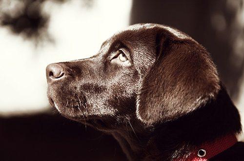 Flere hundeejere vælger at få hunden kremeret