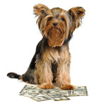 det koster at have hund