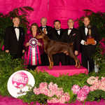 Eukanuba World Challenge Champion 2010