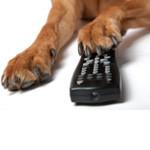 TV-reklamer til hunde