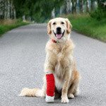 MyPetVet, dyrlæge app