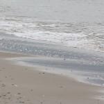 At tage hunden med på stranden