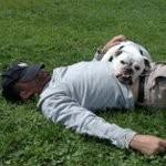 Hunde og mennesker hygger sig på Dog Camp