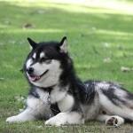 Pas på hugormebid hos hunden
