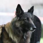 Bortløbne hunde efterlyses på nettet