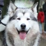 Nysgerrig hund til Bakkeskue