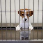 dyreværnssag