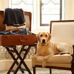 Chien Bleu, rejsebureau for hundeejere og deres hunde