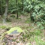 Billede fra Blåvand hundeskov