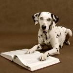 sjove hundebøger