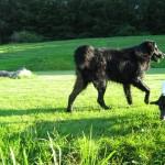 Hareskovene hundeskov ved Bagsværd