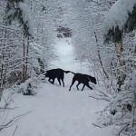 Vinter i Høve Hundeskov