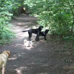 Glade hunde i Høve Hundeskov