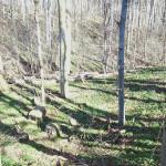 Træer og krat i Høve Hundeskov