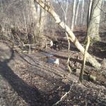Hundene nyder Høve Hundeskov
