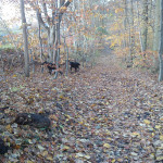 Efterår i Høve Hundeskov