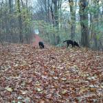 Hundene snuser i Høve Hundeskov