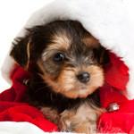 Hunde Nyheders julekalender