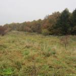 Der er både mark og skov ved Vestskoven Oxbjerget hundeskov