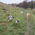 Vestskoven Oxbjerget Hundeskov bruges af mange hunde