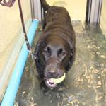 Projekt om hunde og motion