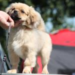 prissammenligning sygeforsikring hund