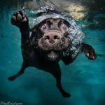 Seth Castels billeder af undervandshunde