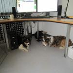 Hunde på universitetet