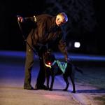 Refleks og lys til hund