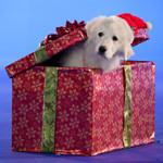 julehunden 2 fra disney