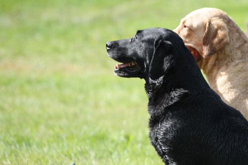 hunde kan genkende folk på fotos