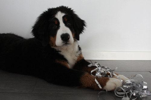 hund nytårsaften