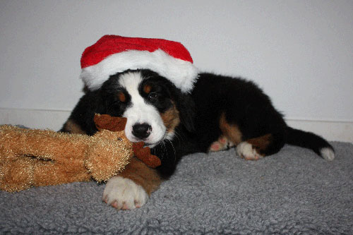 Wilmas første jul