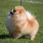 er blandingshunde sundere