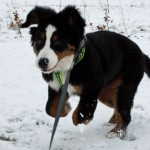 Wilma i sneen