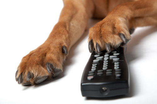 gode hundefilm