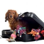 Hund og campingplads