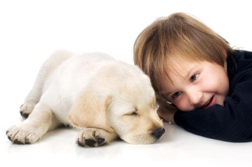 hunden, menneskets bedste ven