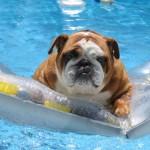 hund med på ferie