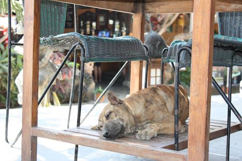 gadehunde i tyrkiet