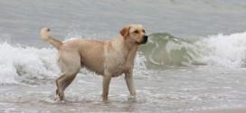 Fra 1. april skal hunden være i snor på stranden