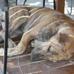 hunde i ikea