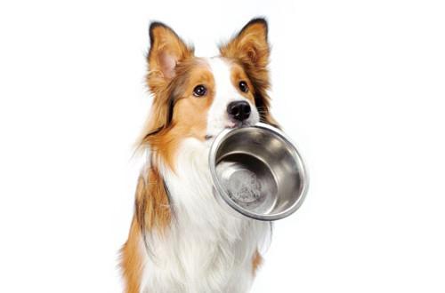 Hundefoder tilbagekaldes på grund af forhøjet D-vitamin