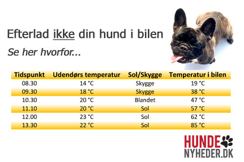hund og varm bil