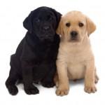 salg af hunde