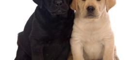 Hundebørnehaver dækker et reelt behov