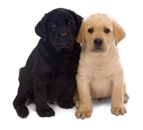 hundenvane