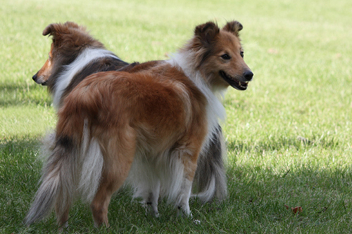 hunde og ældre